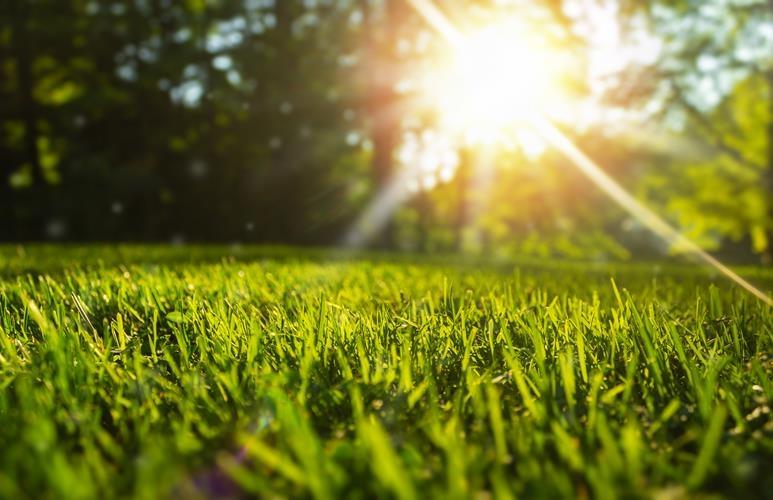 etapy wzrostu trawy