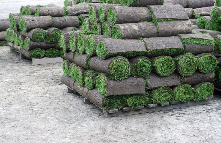 jak kłaść trawę z rolki