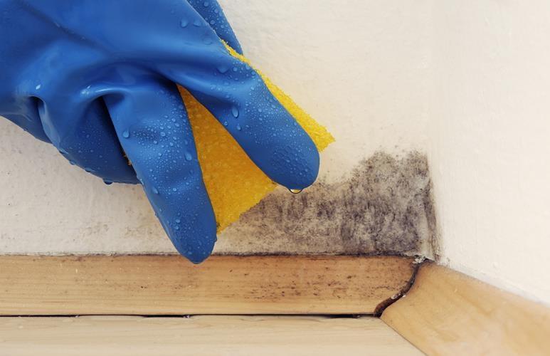 czym usunąć grzyba ze ściany