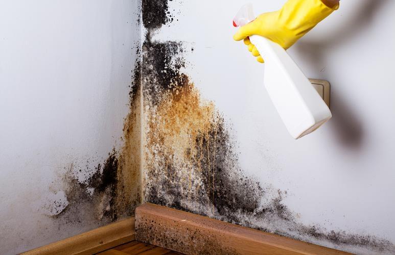 jak usunąć grzyba ze ściany