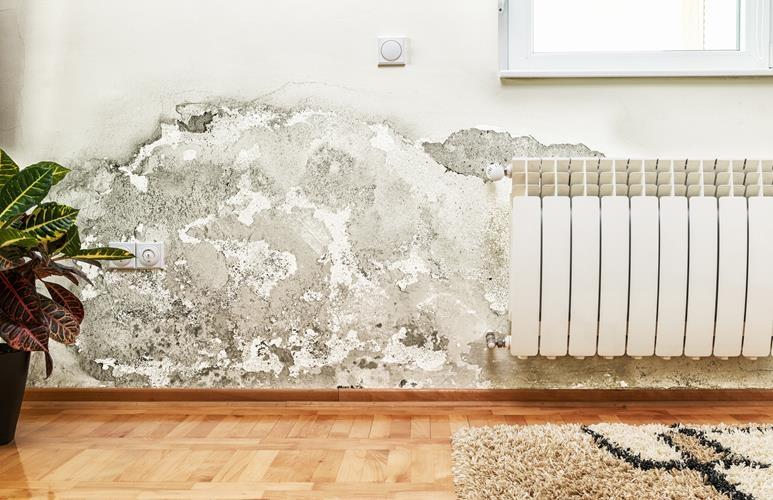 jak usunąć grzyba ze ściany domowe sposoby