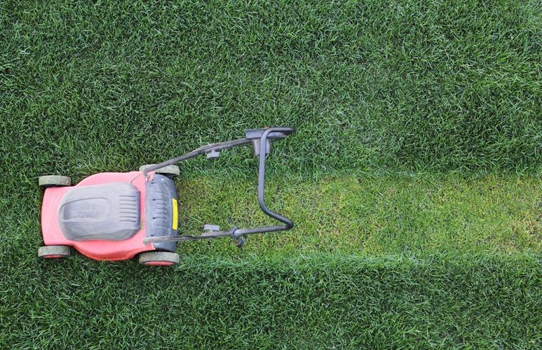 jaka kosiarka do trawy