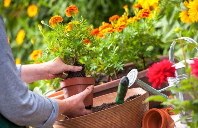 jak zrobić mały ogródek