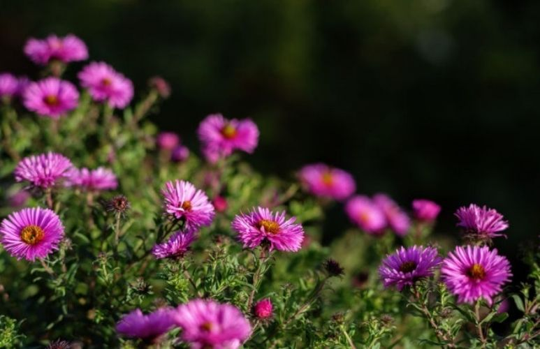 ogródek kwiatowy przed domem