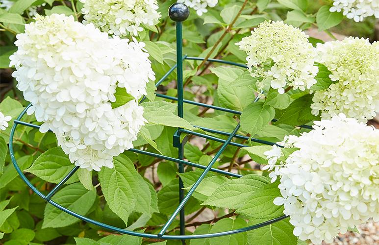 Podpora do roślin Verve siatkowa śr. 43 cm