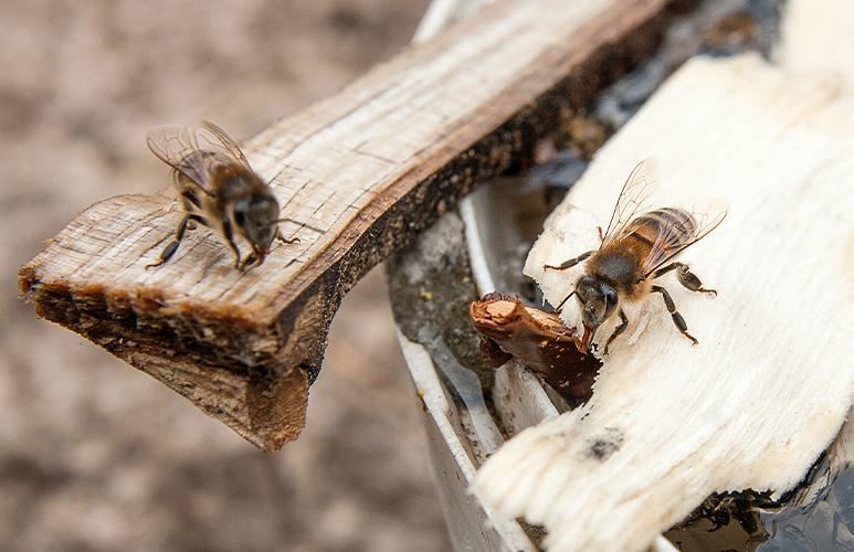 poidełko dla pszczół