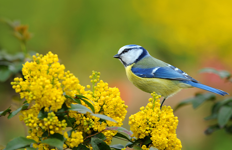 ptaki w ogrodzie