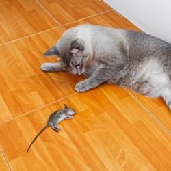 podłoga gdy mamy zwierzę w domu