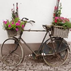 rower jako kwietnik