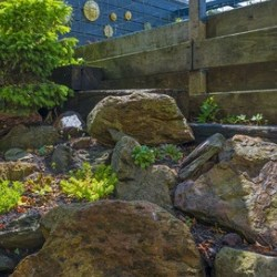 skalniak z roślinami