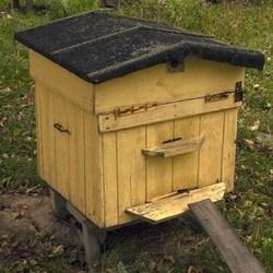 żółty ul dla pszczół