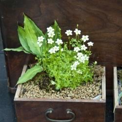 roślinka w szufladzie