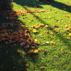 liście na trawie