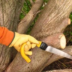 rękawice ochronne w ogrodzie