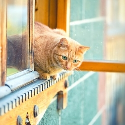 kot na parapecie, bezpieczny dom