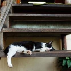 kot śpiący na schodach