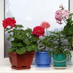 kwiatki jako ozdoba, dekoracje kwiatowe