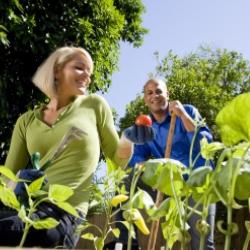 praca w ogrodzie, horiterapia