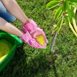 nawożenie ręczne drzew owocowych