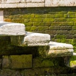 glony na cegle elewacyjnej, piwnica