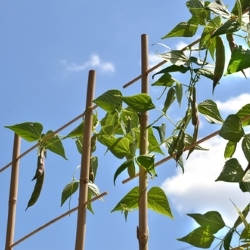 podpórki bambusowe