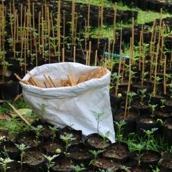 tyczki z bambusa