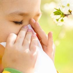 rośliny, które wywołują alergię