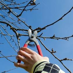 podcinanie gałęzi