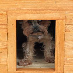 buda drewniana, jak wykonać budę dla psa