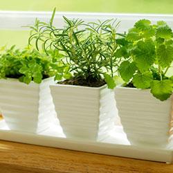 jak zadbać o rośliny w czasie urlopu