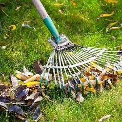 grabienie liści