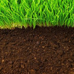 trawnik gleba gliniasta