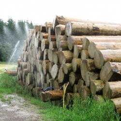 opryskiwanie drewna przeciw szkodnikom