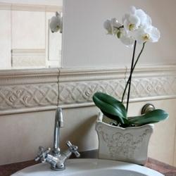 Jakie Kwiaty Do łazienki Inspiracje I Porady