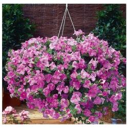 Kiedy Możemy Przenosić Rośliny Z Domu Na Balkon