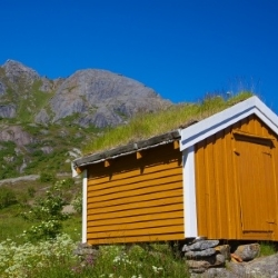 porośnięty dach domku w górach