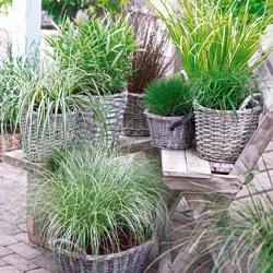 Rośliny Wieloletnie W Donicach Jakie Gatunki Wybrać I Jak