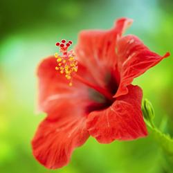 egzotyczny kwiat, ogród, rośliny