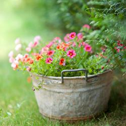 kwiat w metalowej misy