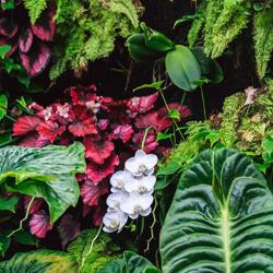 rośliny egzotyczne