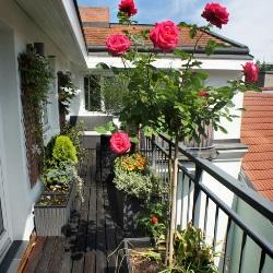 wymagające rośliny na balkonie