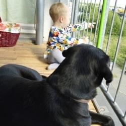 pies z dzieciem na balkonie