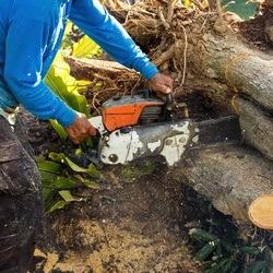 cięcie drewna piłą motorową
