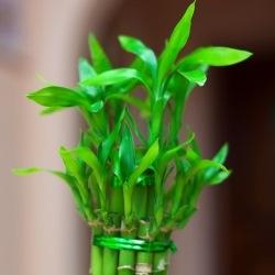 Bambus Ogrodowy Uprawa I Pielegnacja Inspiracje I Porady