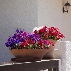 rośliny doniczkowe na zewnątrz