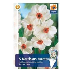 geranium castorama
