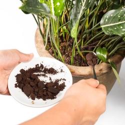 Jak Pielęgnować Rośliny Za Pomocą Kawy I Herbaty