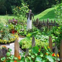 błędy ogrodnika