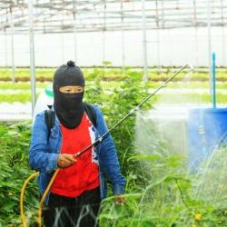 środki ochrony roślin castorama1
