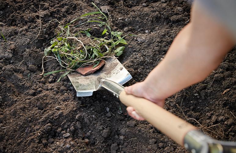 przygotowanie ziemi pod łąkę